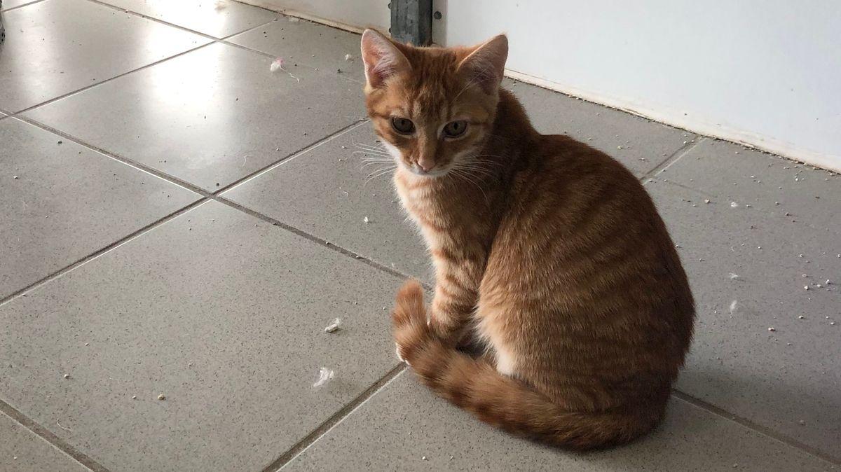 Viele streunende Katzen landen im Tierheim Ansbach.