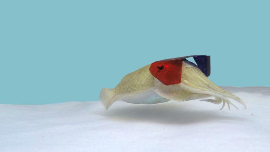 Tintenfisch mit 3D-Brille