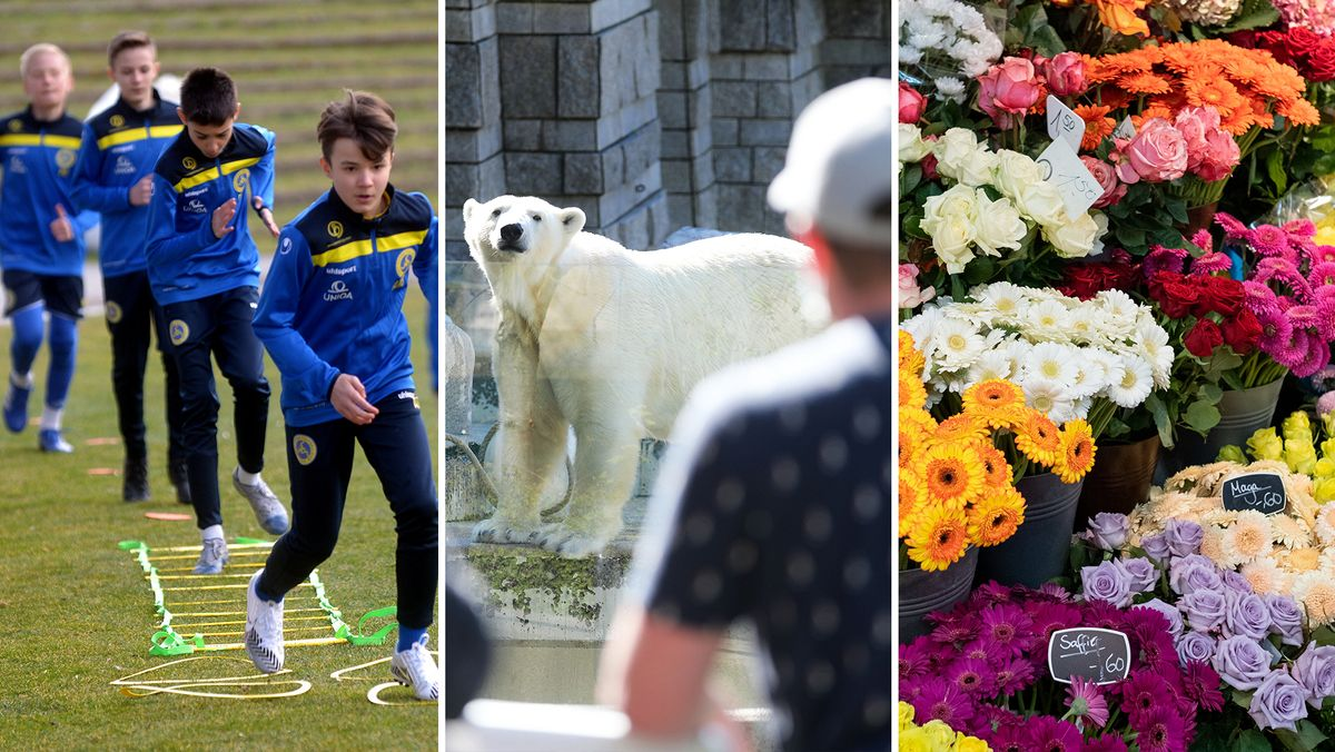 Kinder beim Sport im Freien / Besuch im Zoo / Blumengeschäft