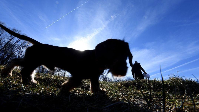 Hund beim Spaziergang (Symbolbild)