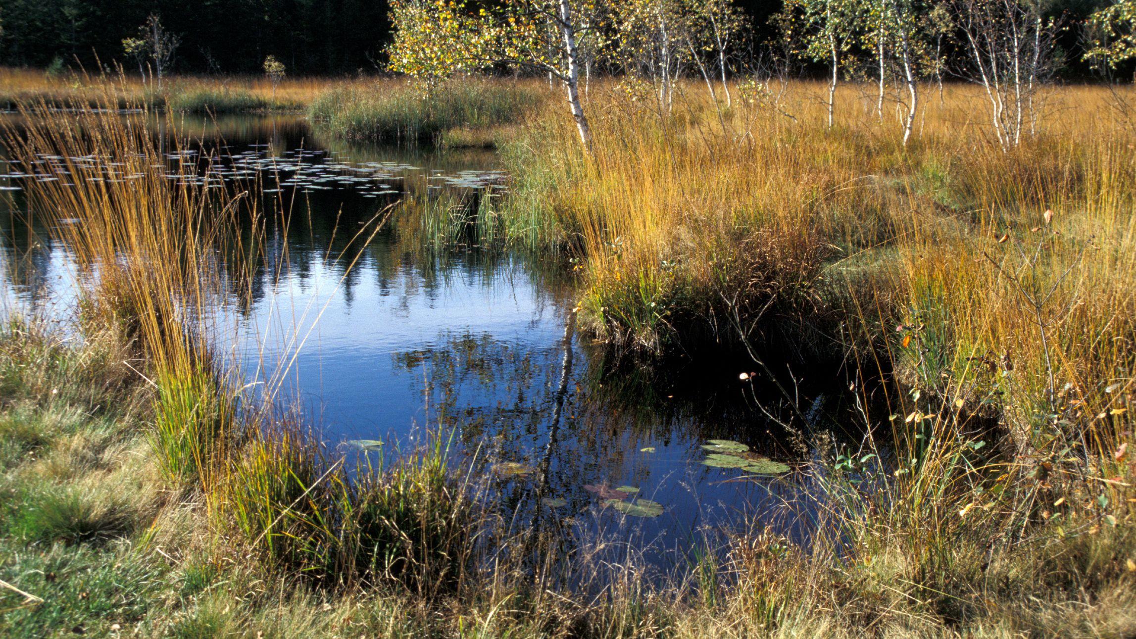 Einer der vielen Tümpel, die im Kolchsee-Moor zu finden sind, einem der schönsten Feuchtgebiete im Zweiseenland zwischen Kochel- und Walchensee.