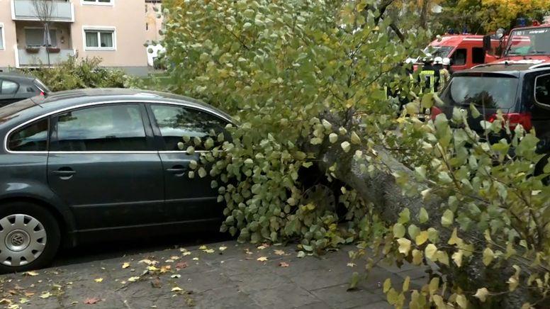 In Oberfranken stürzte ein Baum auf ein geparktes Auto.   Bild:BR