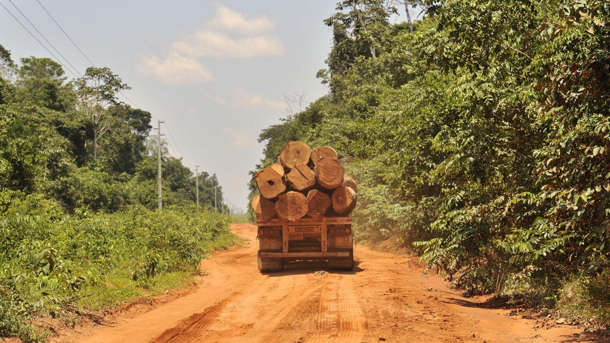 Ein Lkw transportiert Holz aus dem Amazonas Regenwald, Mato Grosso, Brasilien, Südamerika