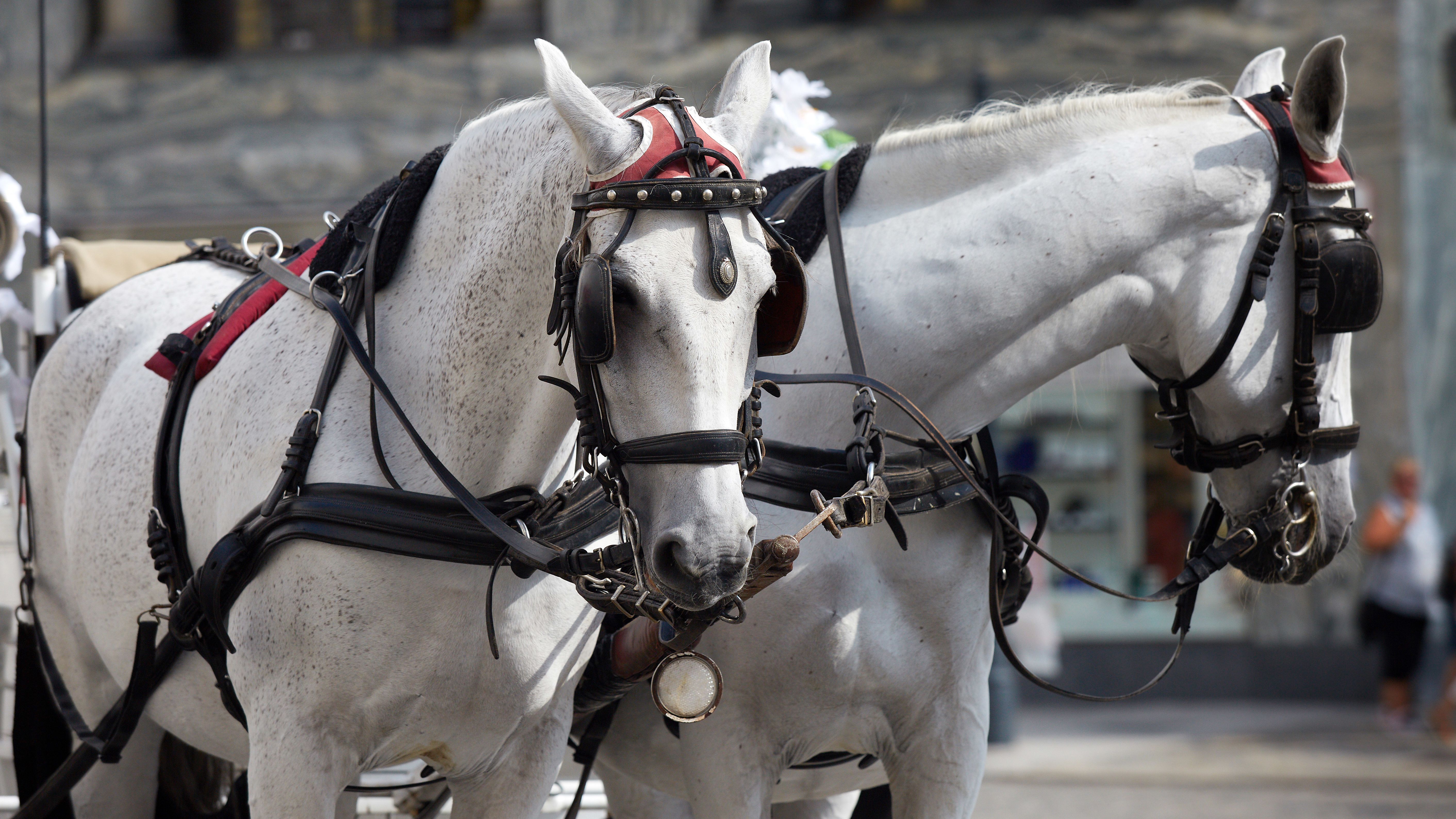 Symbolbild Pferdekutsche