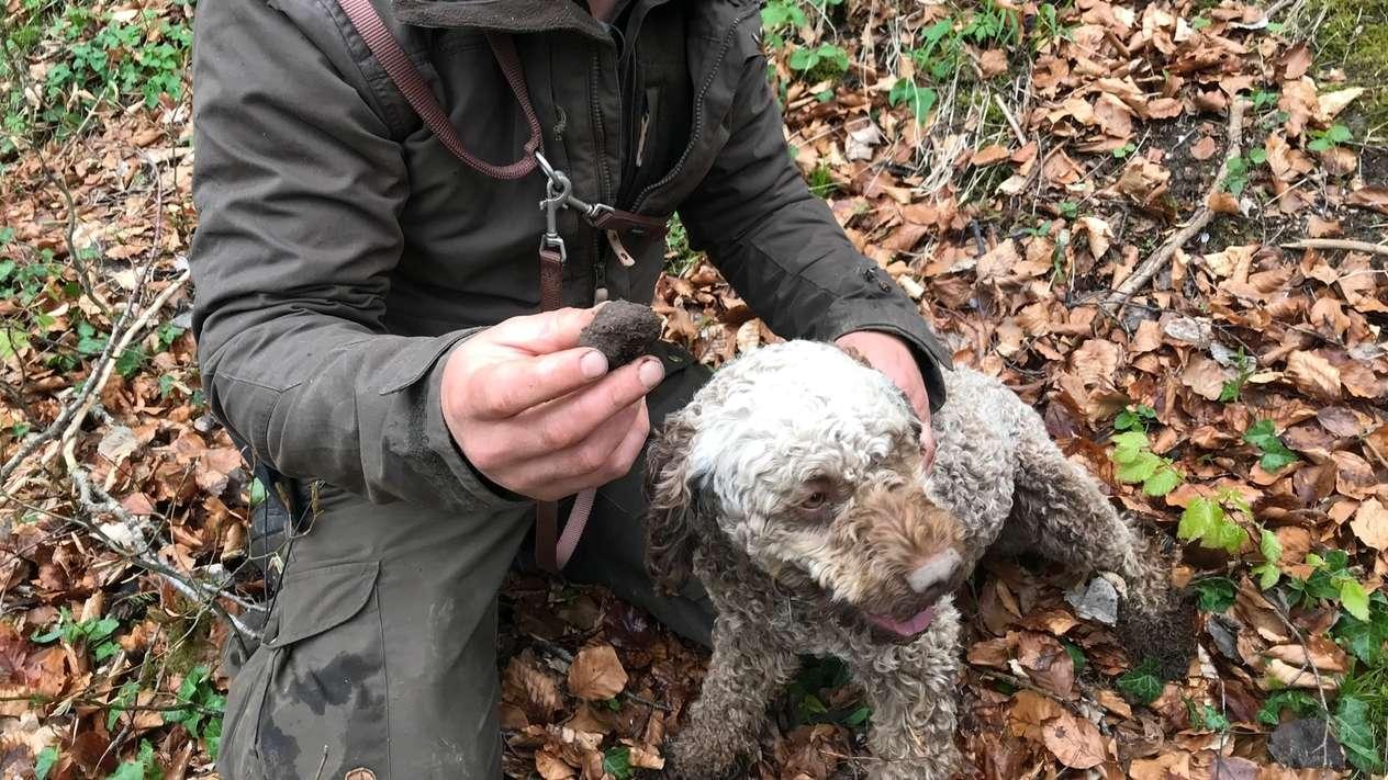 Simon Schauer, der für die Regierung von Schwaben Trüffel sucht, hält einen Trüffel in der einen Hand, mit der anderen streichelt er den Trüffelsuchhund.