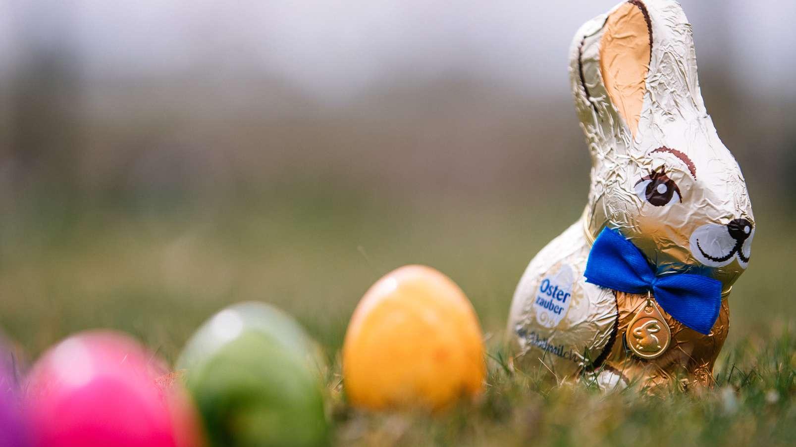 Schokohase und bunt gefärbte Eier im Grünen