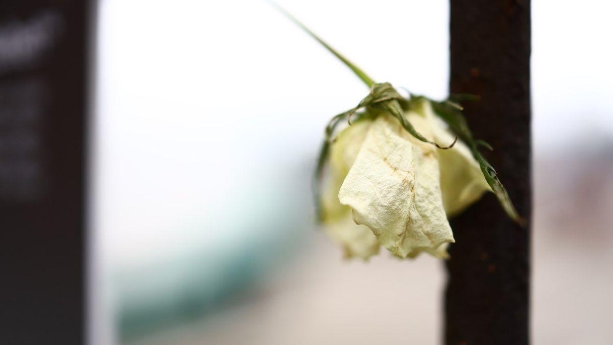 Eine weiße Rose am historischen Zaun.