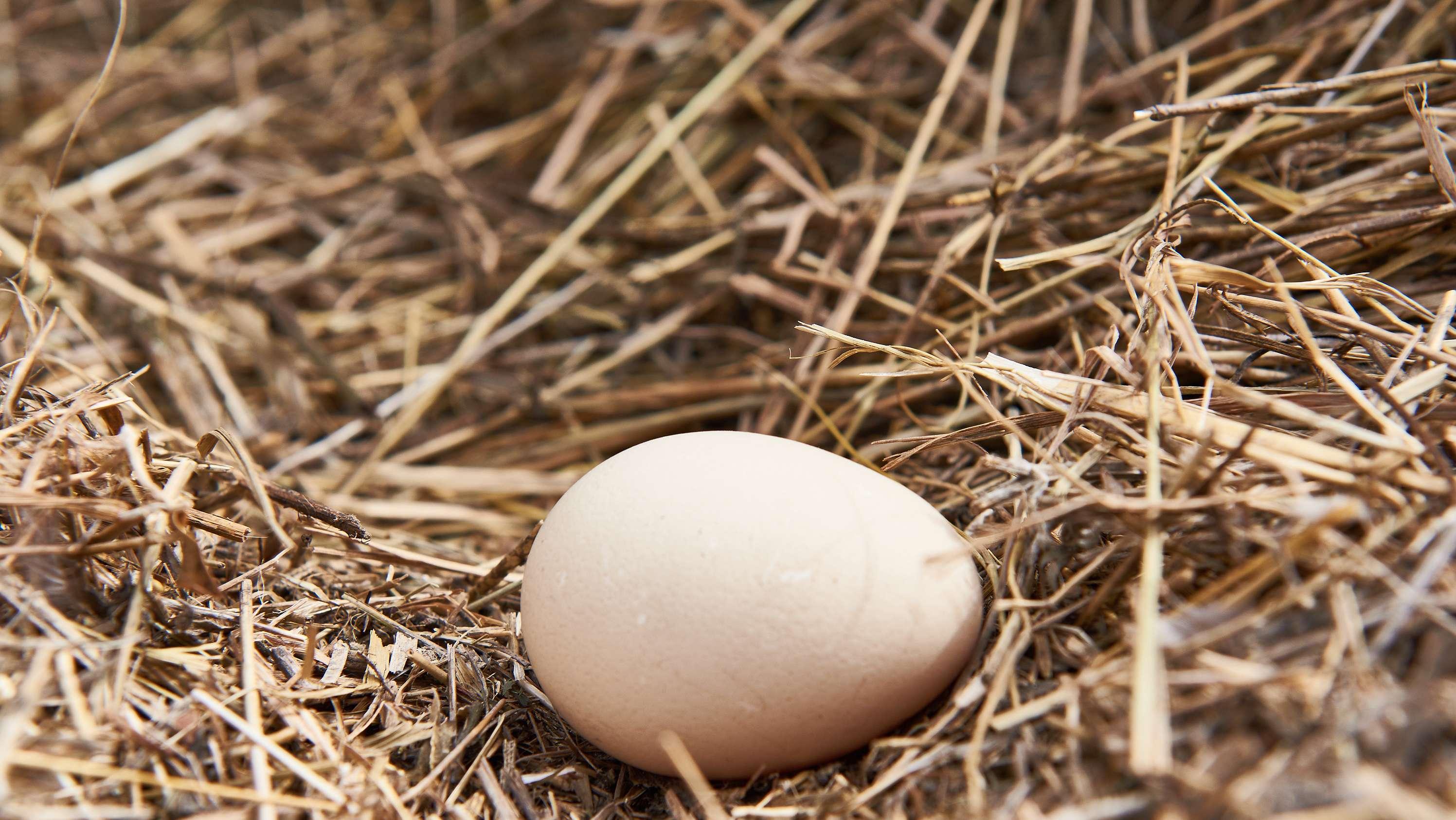 Ovale Eier rollen nicht so leicht davon.