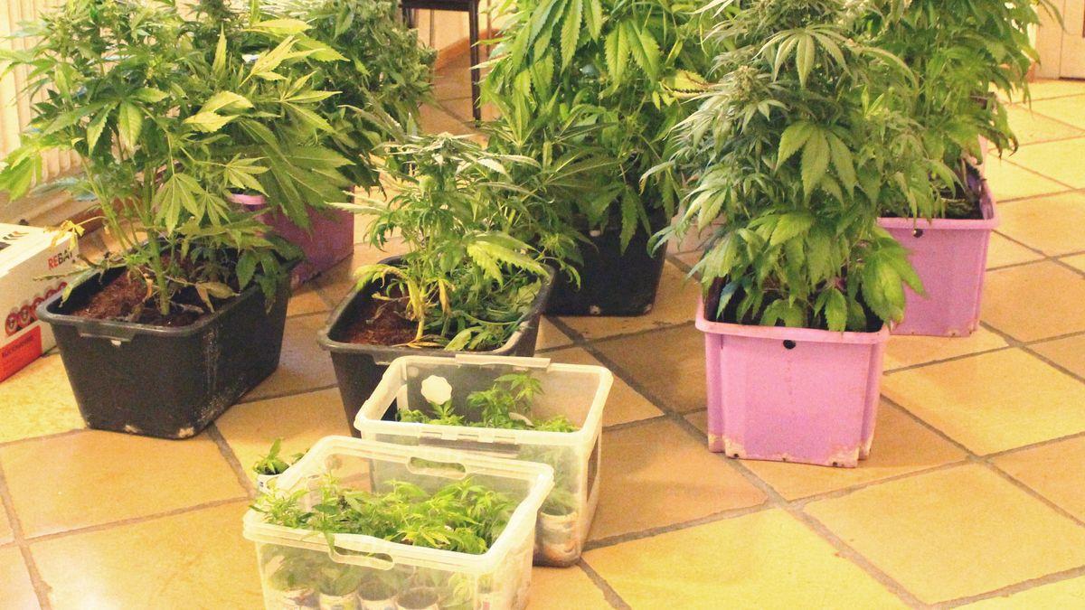 Cannabis-Aufzuchtanlage in Bodenkirchen