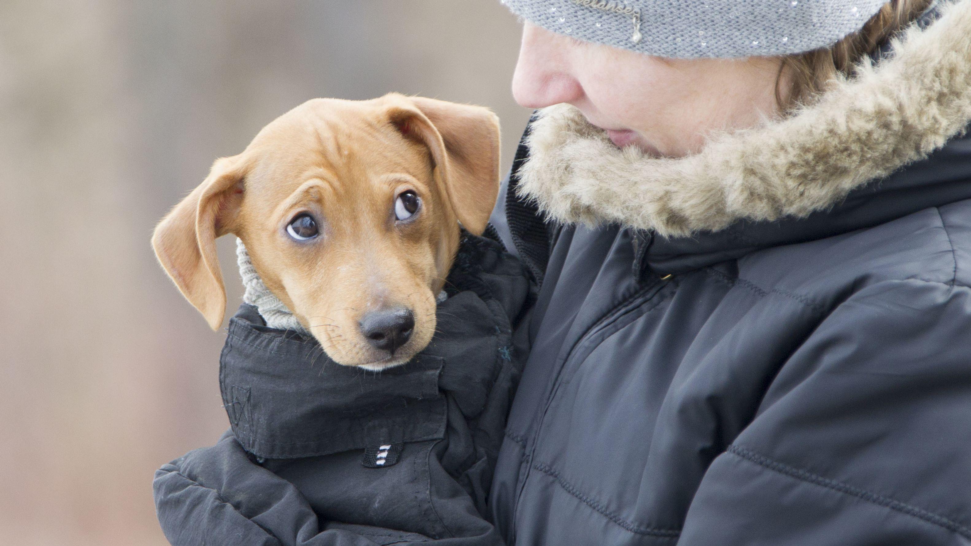 Hund auf dem Arm blickt sein Frauchen an