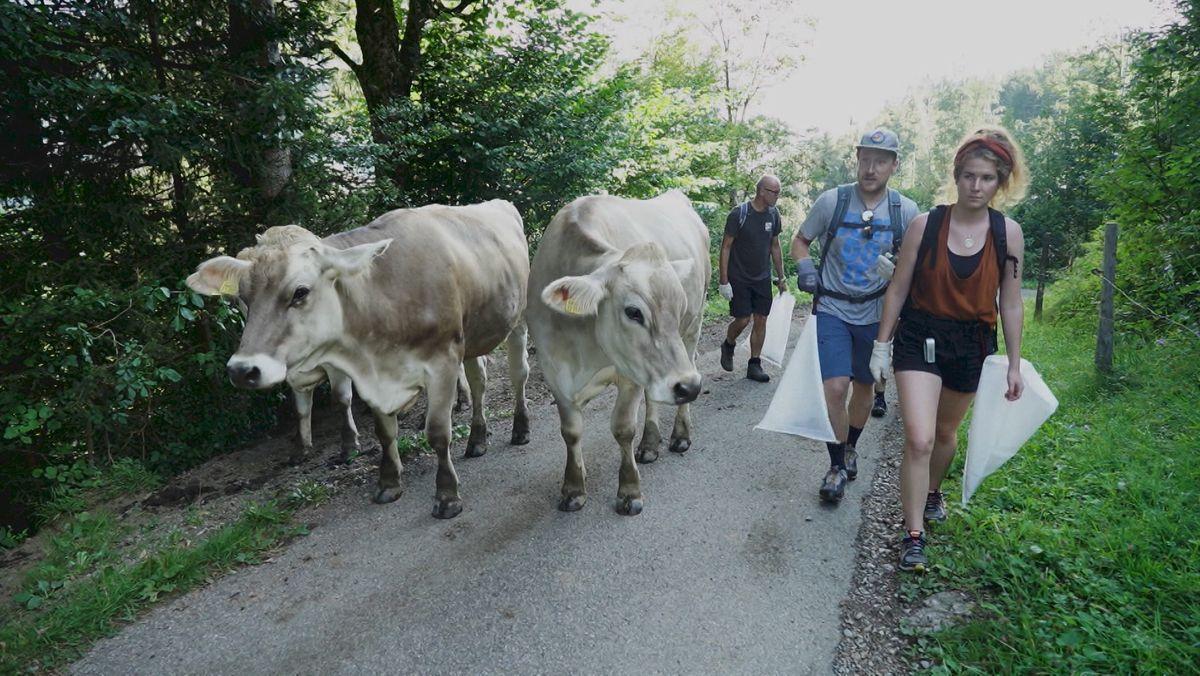 Paar mit Müllsammeltüte und Kühe auf Waldweg