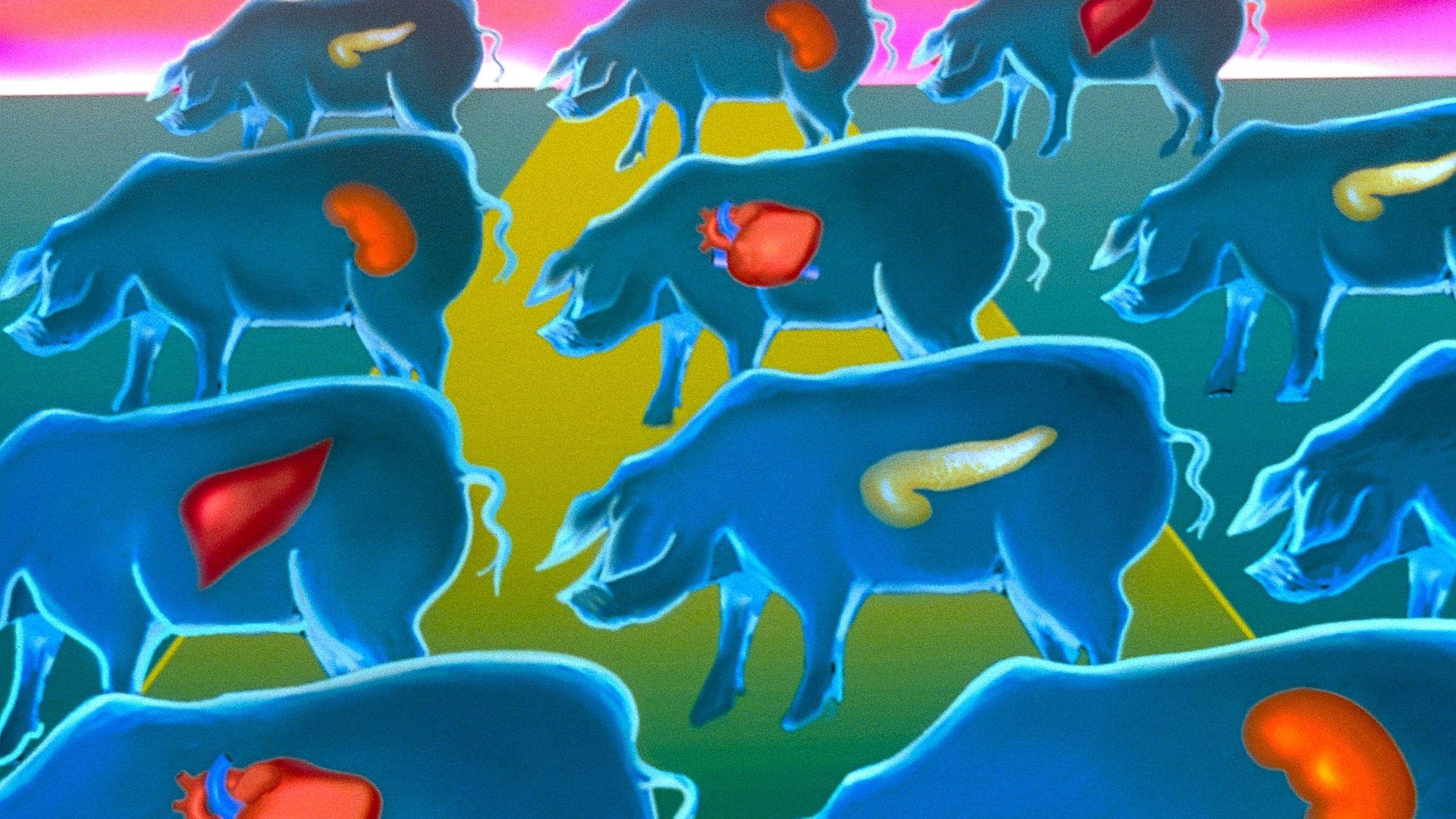 Organe des Schweins: Grafik: Schweine mit ihren Organen gemalt