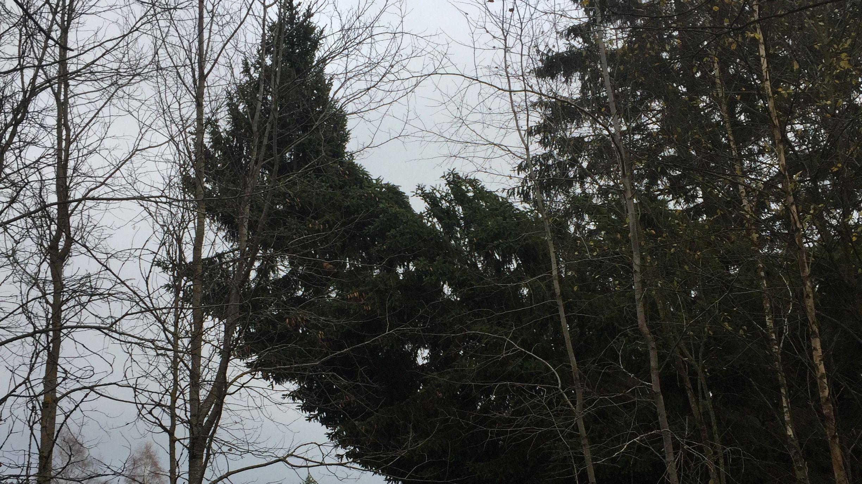 Der stattliche Baum zerbrach, als ihn Mitarbeiter des Nationalparks mit einem Kran auf einen Lkw verladen wollten