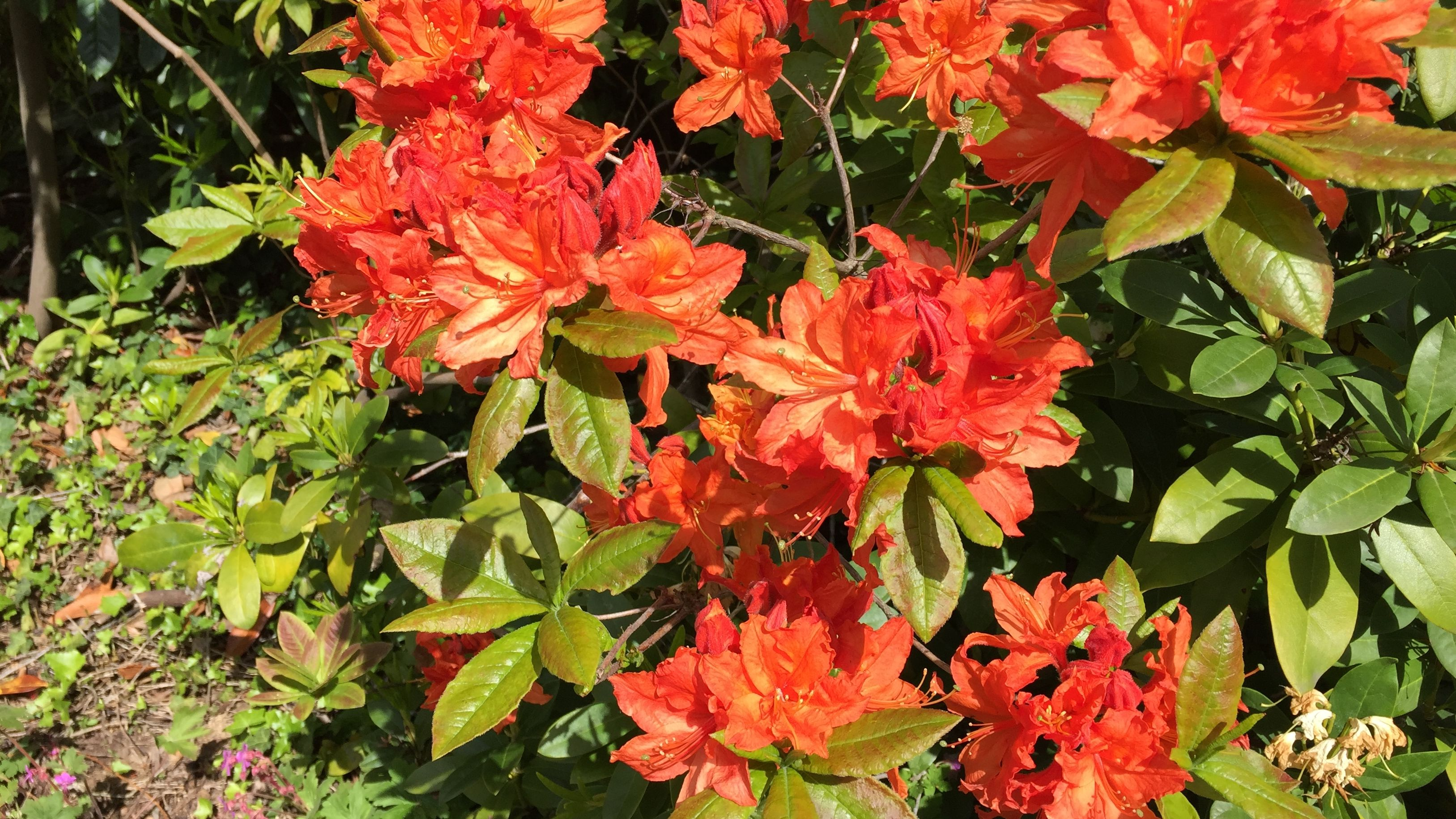 Farbenfrohe Blüten im Garten von Claudia Däubler-Hauschke.