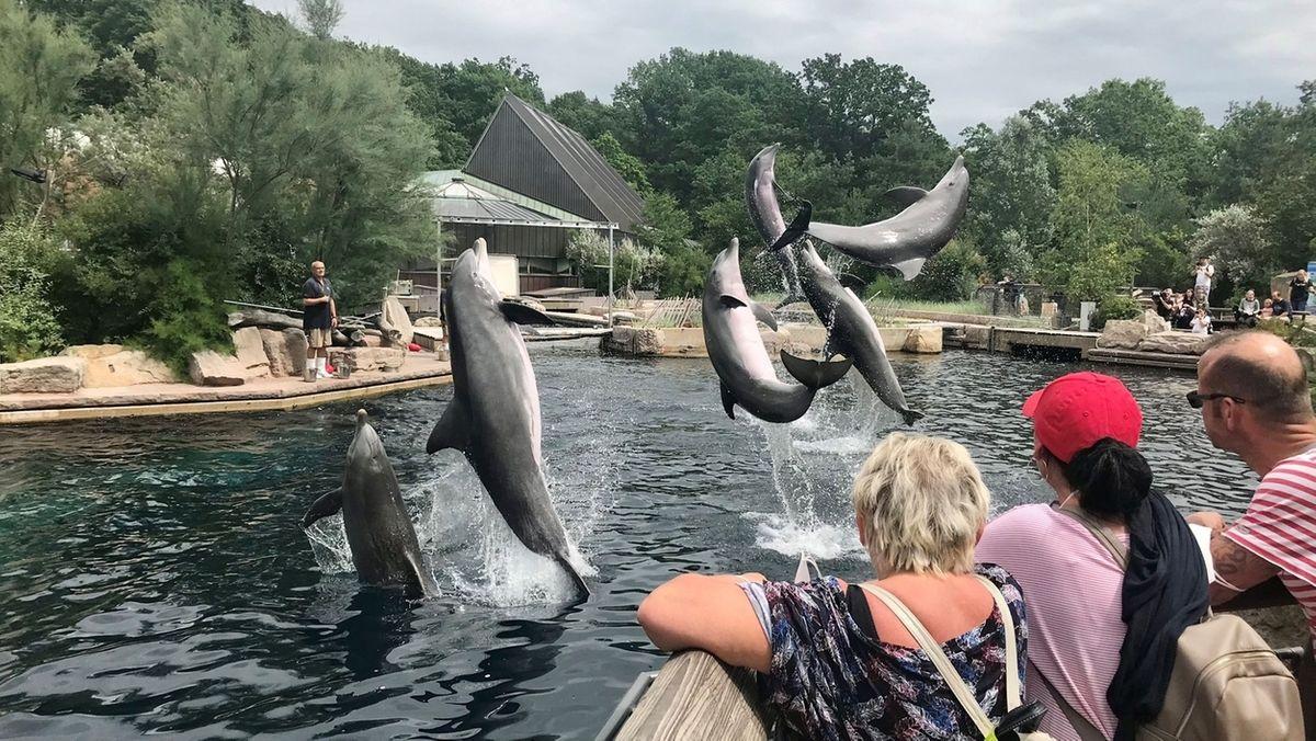 Zuschauer verfolgen, wie sechs Delfine in der Nürnberger Lagune aus dem Wasser springen.