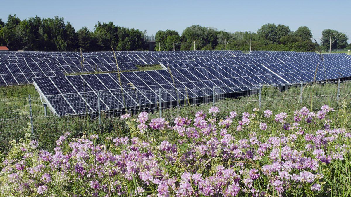 Solarzellen in einem Solarpark, Landshut
