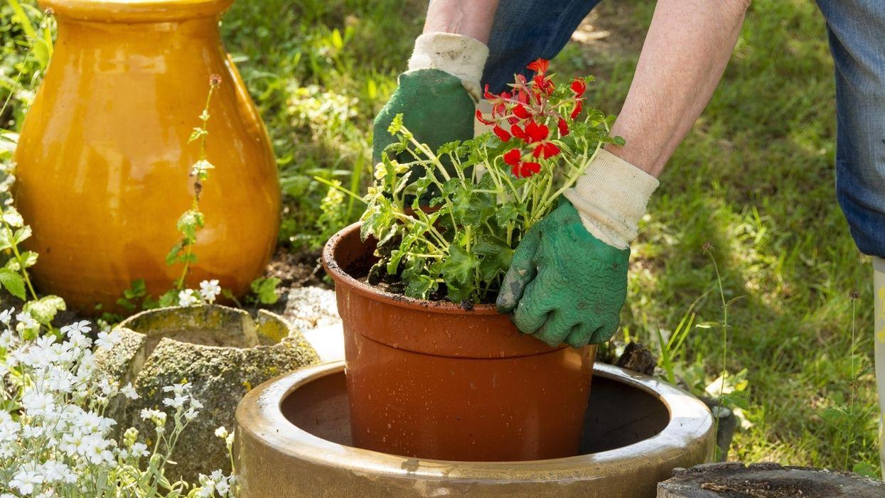 Frau bepflanzt Topf