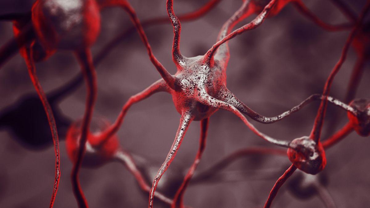 3D-Darstellung eines Biologischen Neuronalen Netzwerks eines menschlichen Gehirns.
