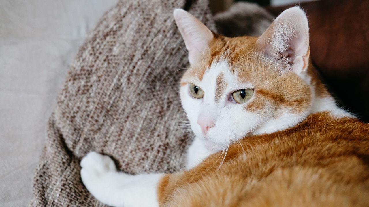 Eine Katze muss vier Kilogramm wiegen, um eine Blutspende machen zu dürfen.