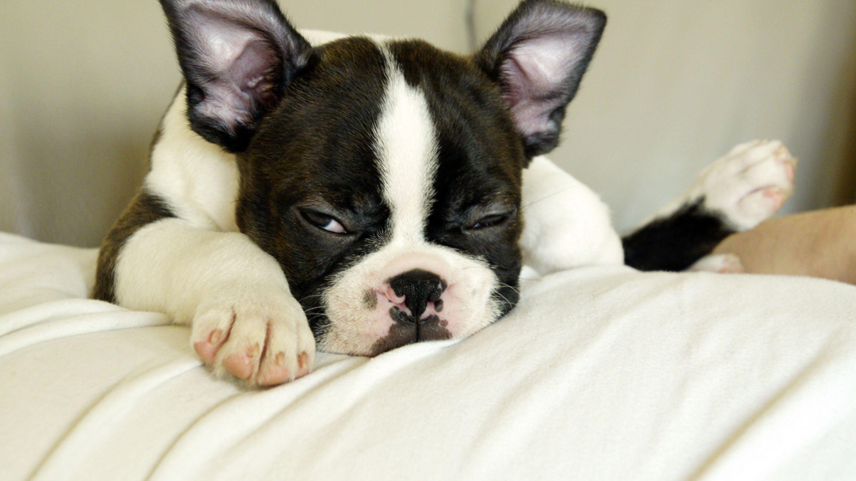 Ein Hund blickt etwas verschlafen drein.