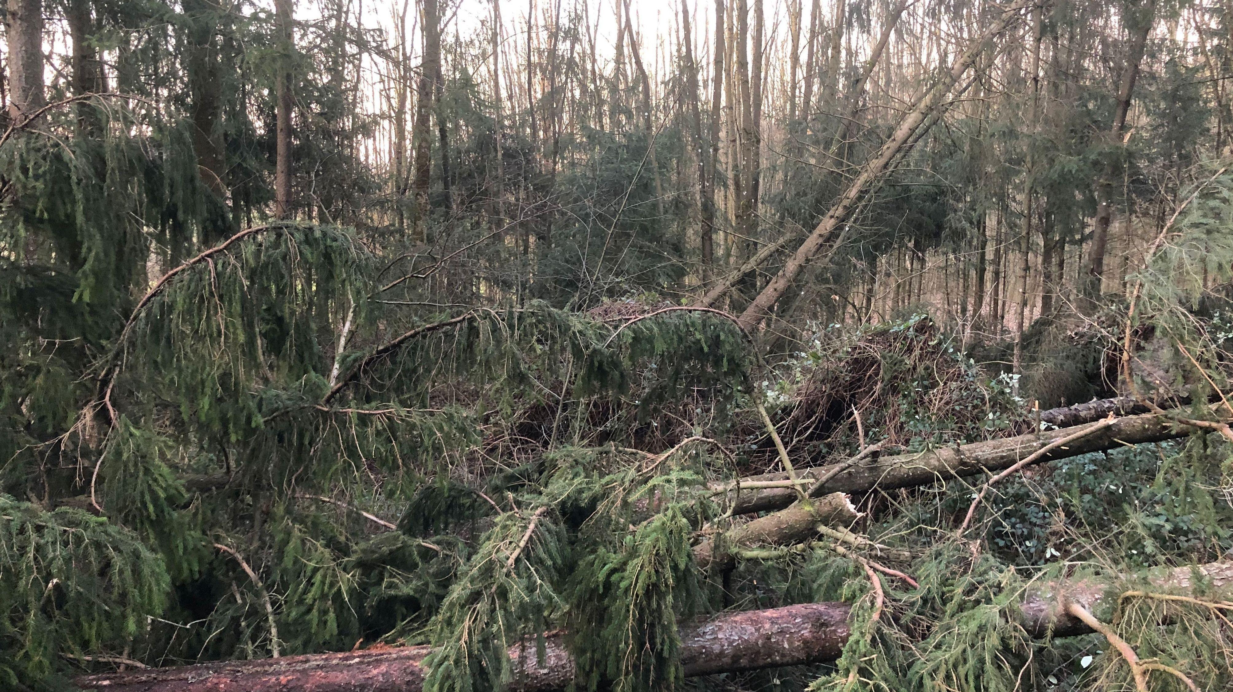 Umgestürzte Bäume im Landkreis Dingolfing