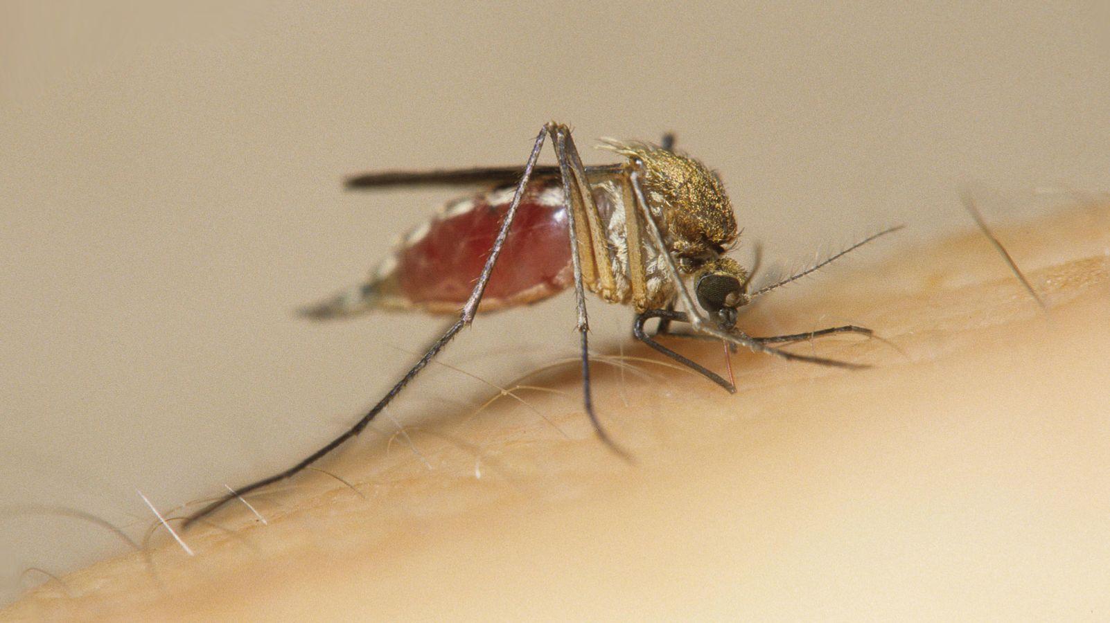 stechmücken vertreiben
