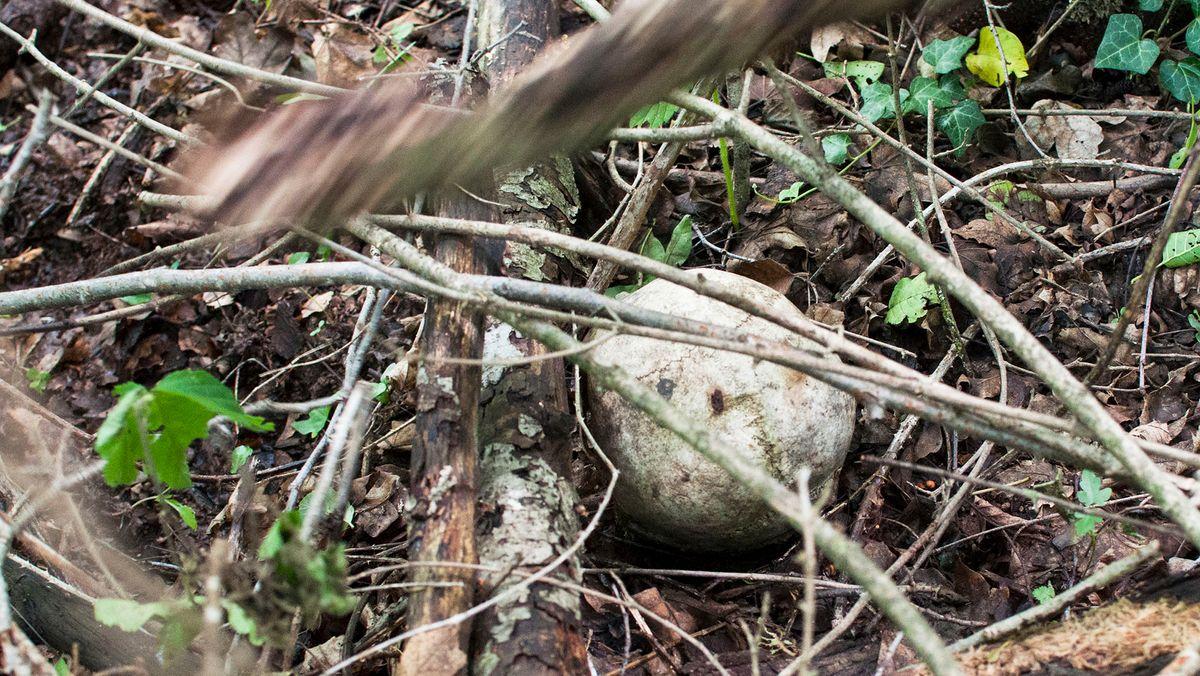 Schädelknochen im Wald