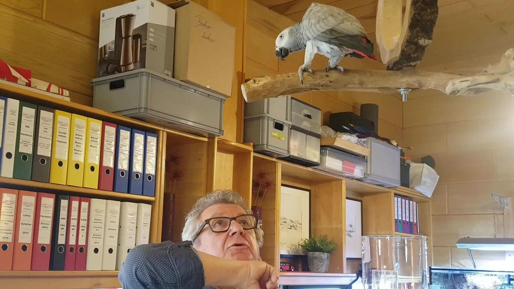 Auf seinem Holzblaken thront Graupapagei Carlo im Büro von Busunternehmer Wolfgang Plach.