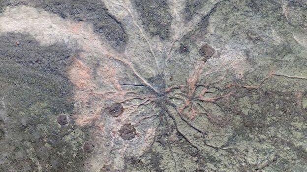 Wurzelfragmente eines Ur-Baums in einem Steinbruch nahe New York.