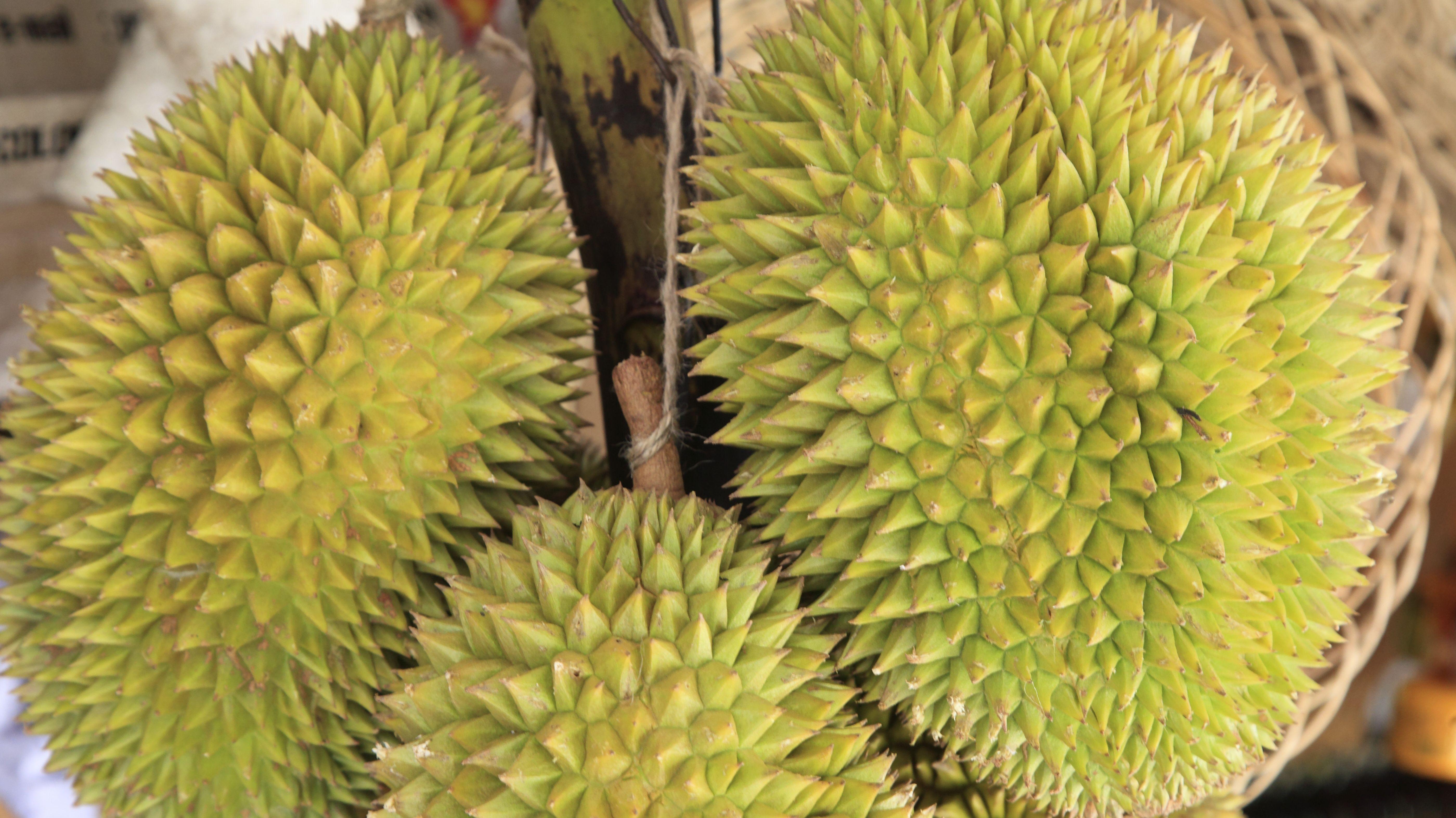 Die südostasiatische Frucht Durian