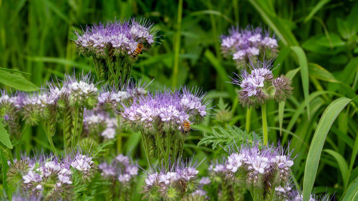 Wildbienen (Symbolbild)
