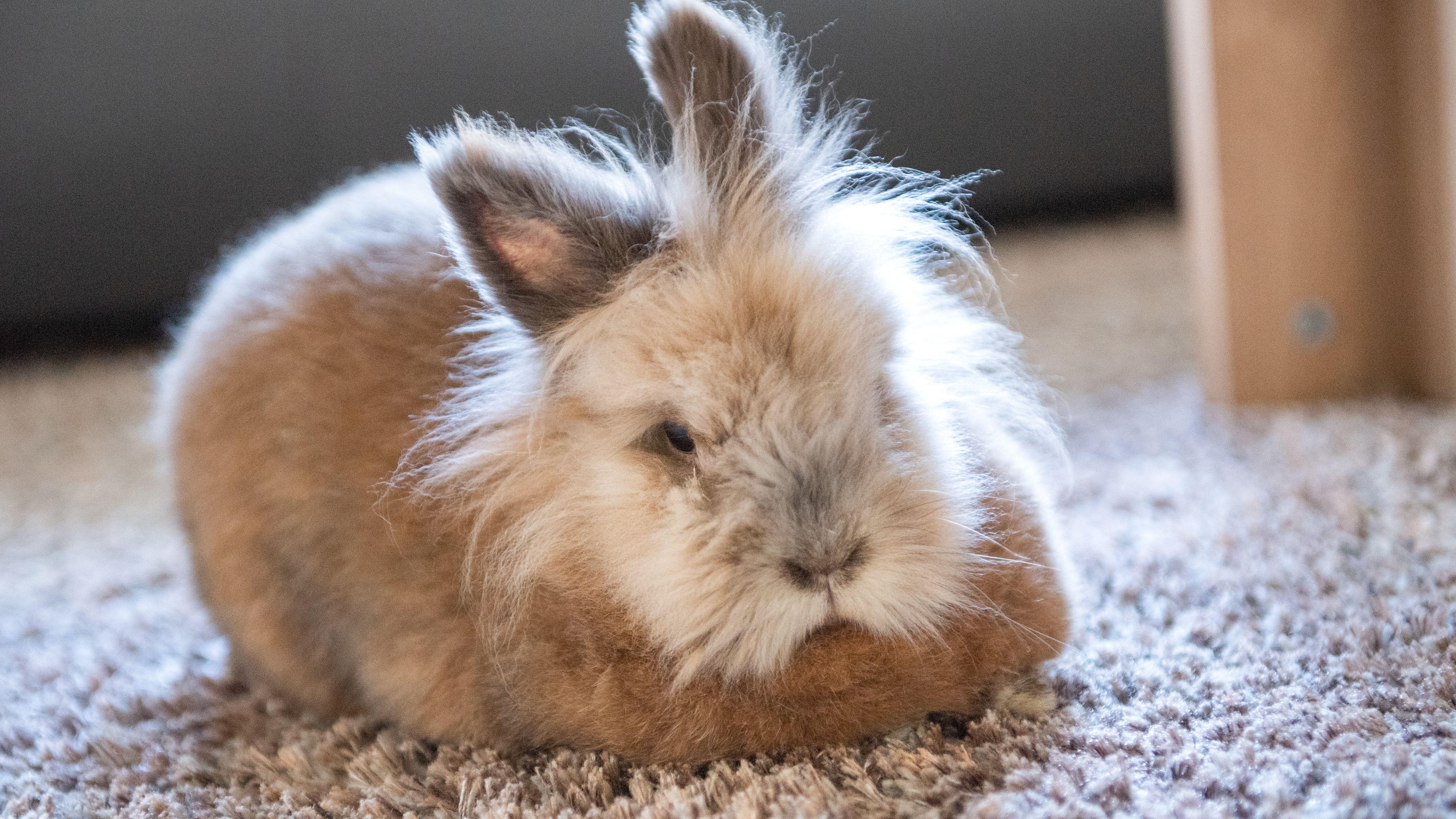 Symbolbild: Kaninchen