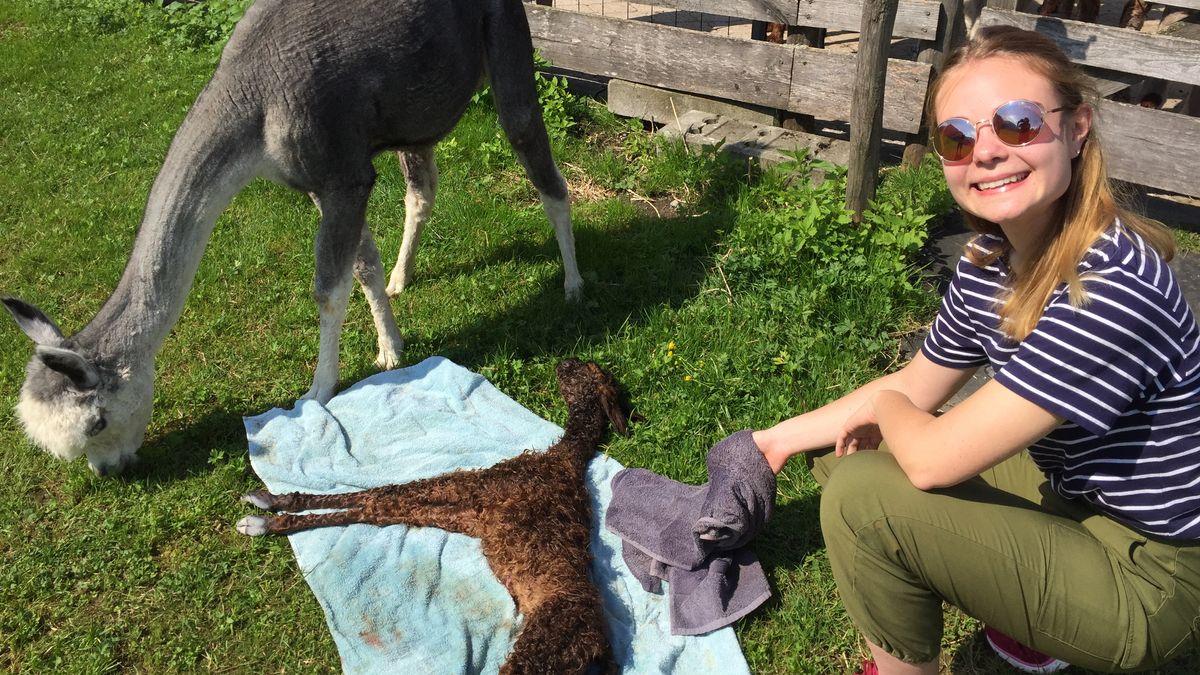 Hebammenschülerin Anja Kobzev strahlt nach der Geburt eines Alpaka-Fohlens.