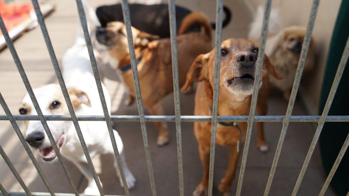 Hunde im Gruppengehege eines deutschen Tierheims.