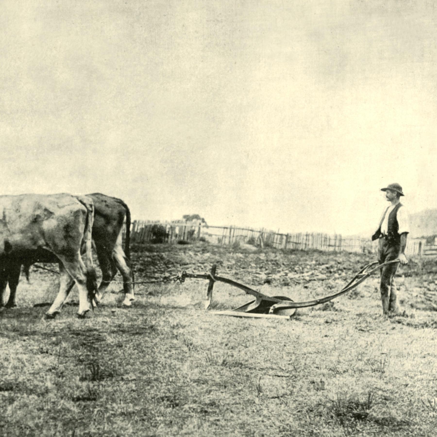Der Beginn der Landwirtschaft - Zivilisation und Risiko