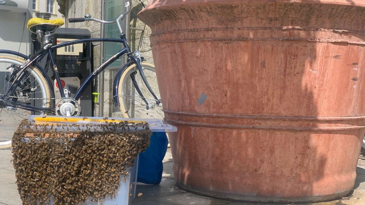 Bienenschwarm auf dem Regensburger Neupfarrplatz