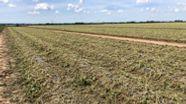 Komplett plattgedrückt sind die Gemüsekulturen auf den Feldern. | Bild:BR/Harald Mitterer