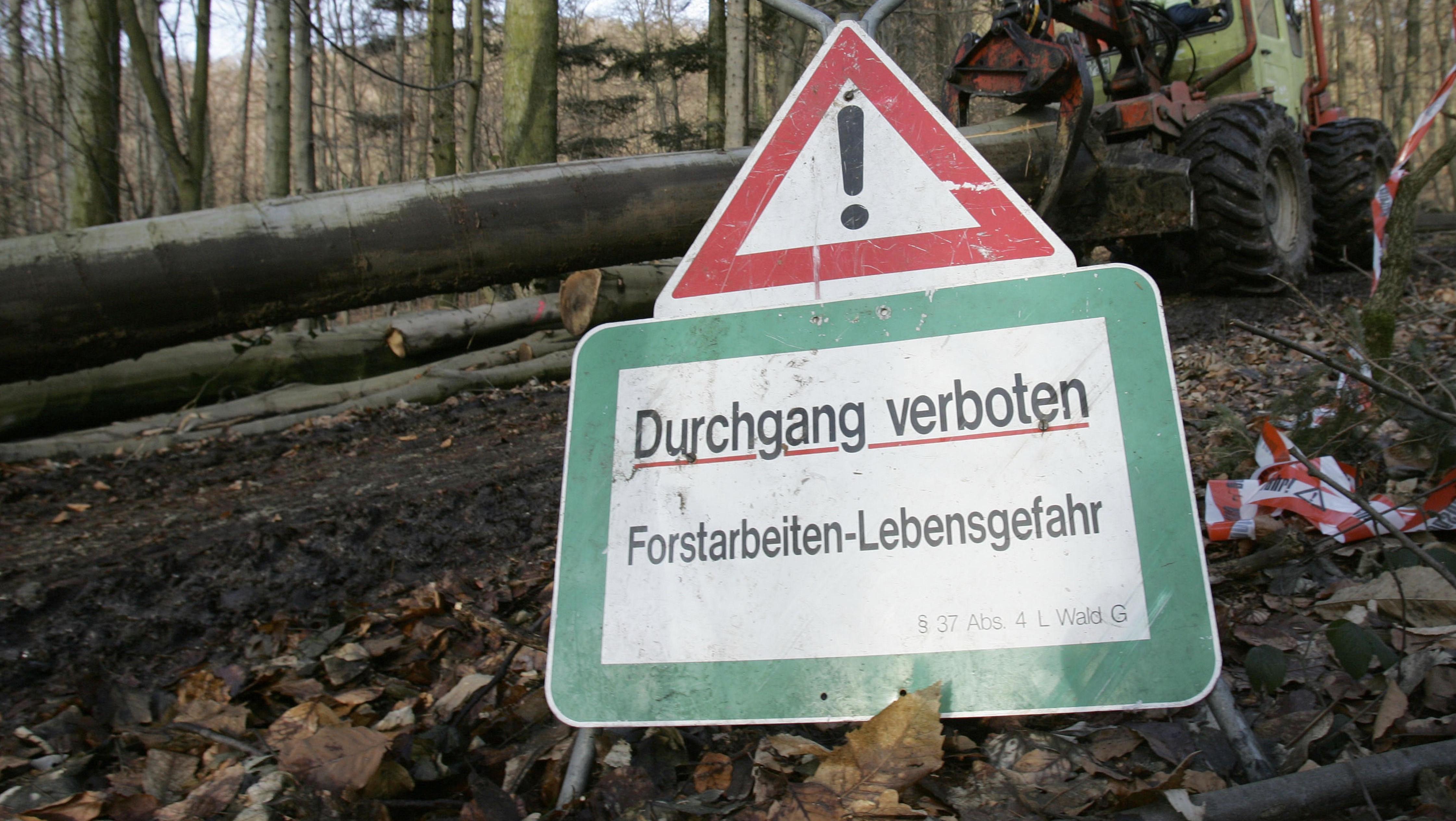 Symbolbild Forstarbeiten