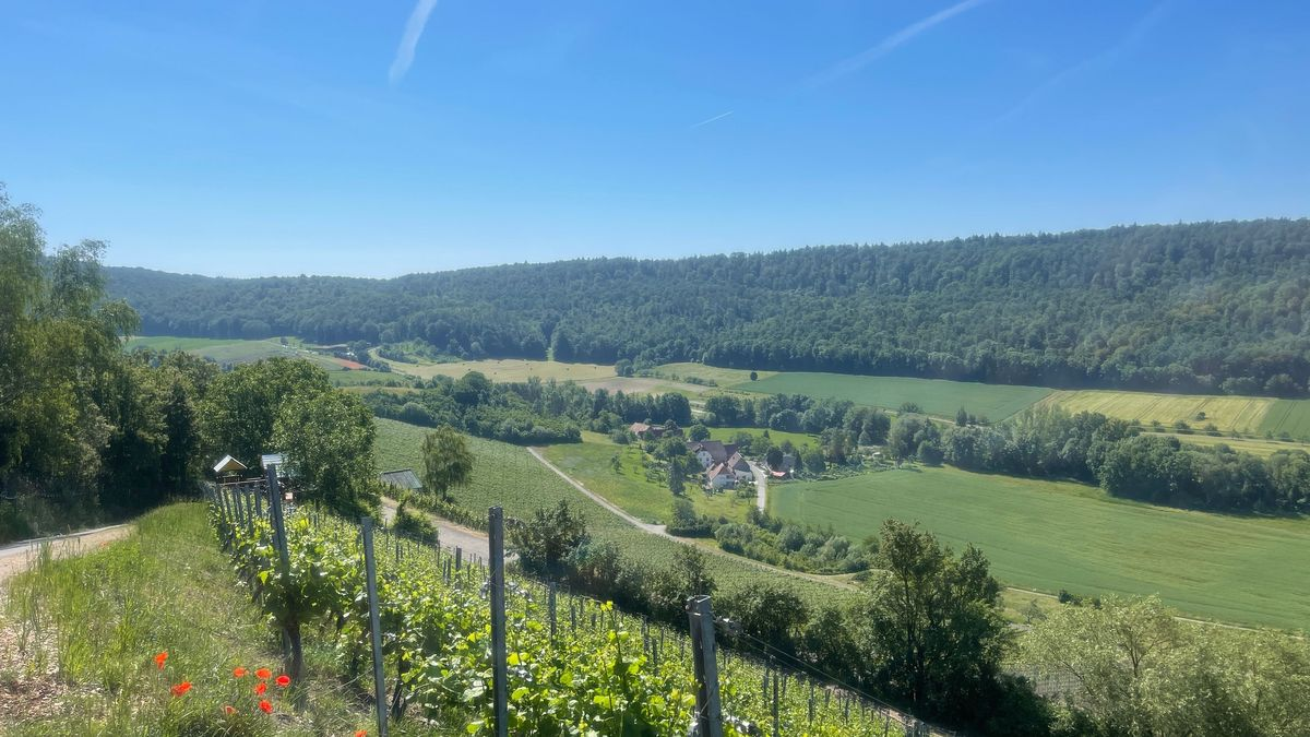 Der Naturpark Steigerwald ist einer von 19 Naturparks in Bayern. In diesem Jahr feiert er sein 50-jähriges Jubiläum.