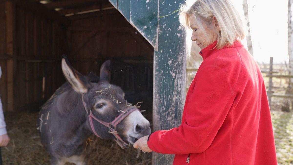 Janne Kellner gibt einem Esel Futter