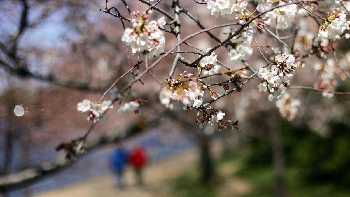 Zwei Menschen gehen im Frühling Spazieren