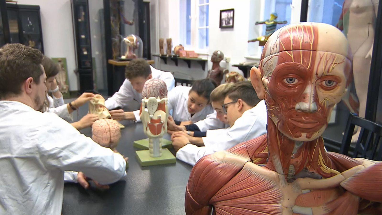 Anatomie zum Anfassen: Coburger Firma fertigt Modelle