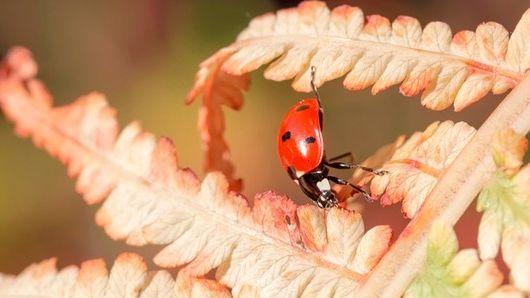 Landesbund für Vogelschutz ruft zur Insektenzählung auf