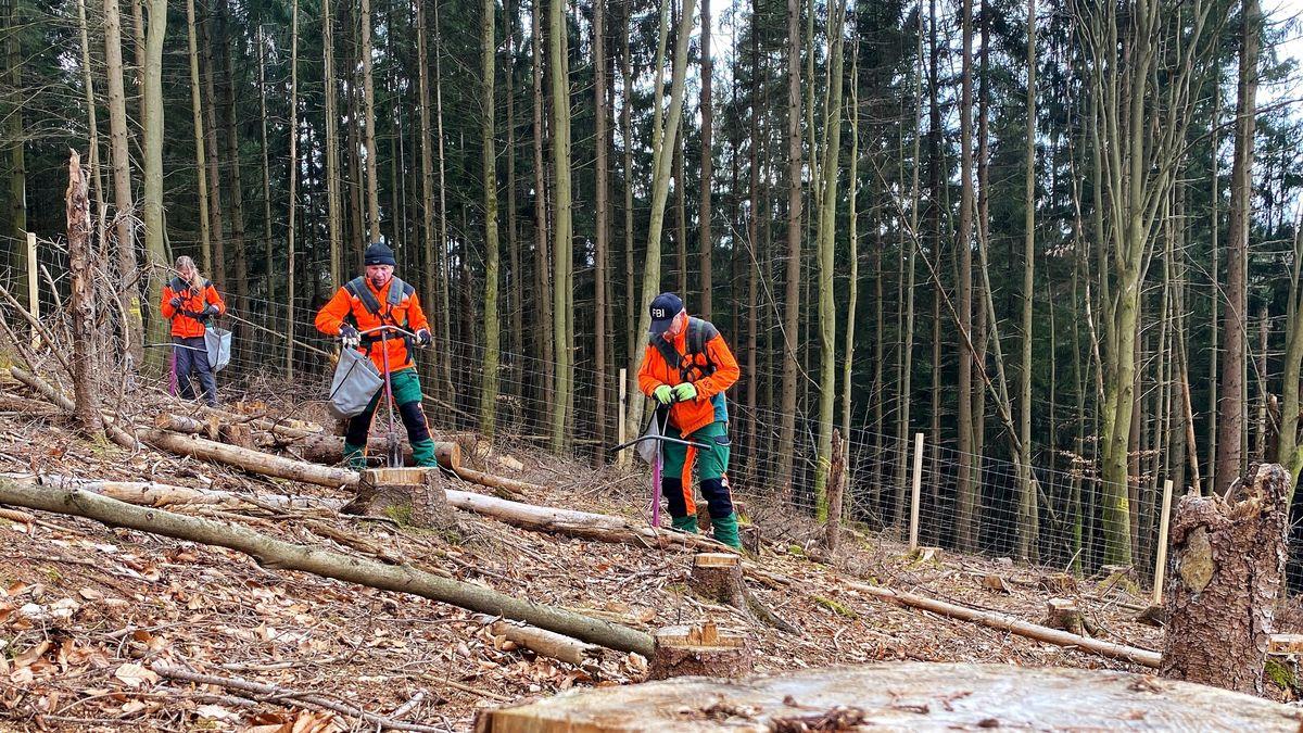 Kastanienpflanzung im Wald bei Rothenbuch