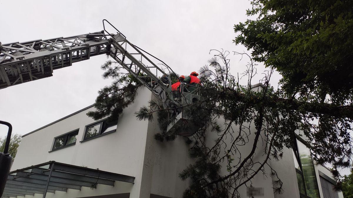 Einsatzkräfte der Feuerwehr Landshut entfernen einen umgefallenen Baum