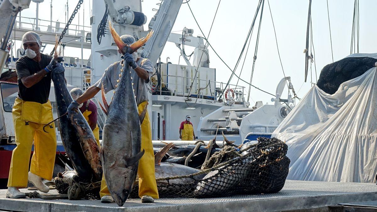Fischer beim Netz-Entladen