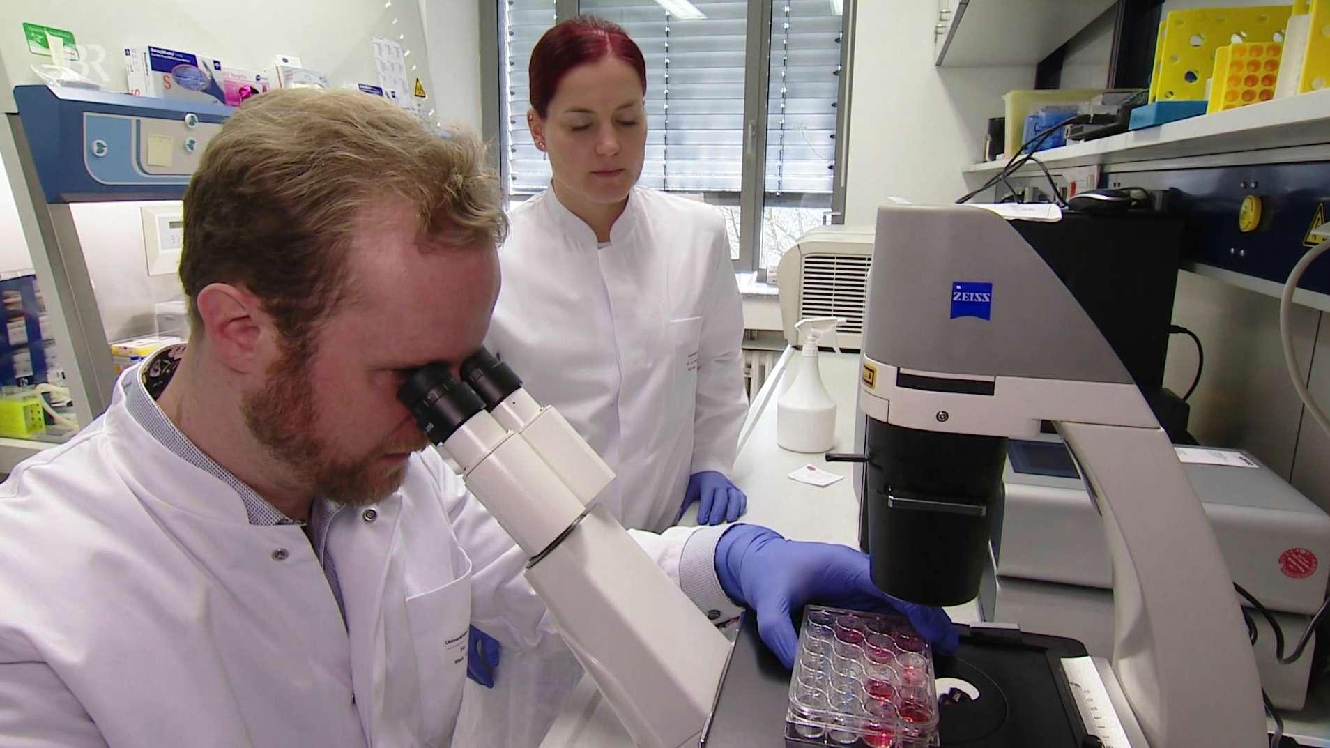Immuntherapie gegen Krebs zeigt Erfolge