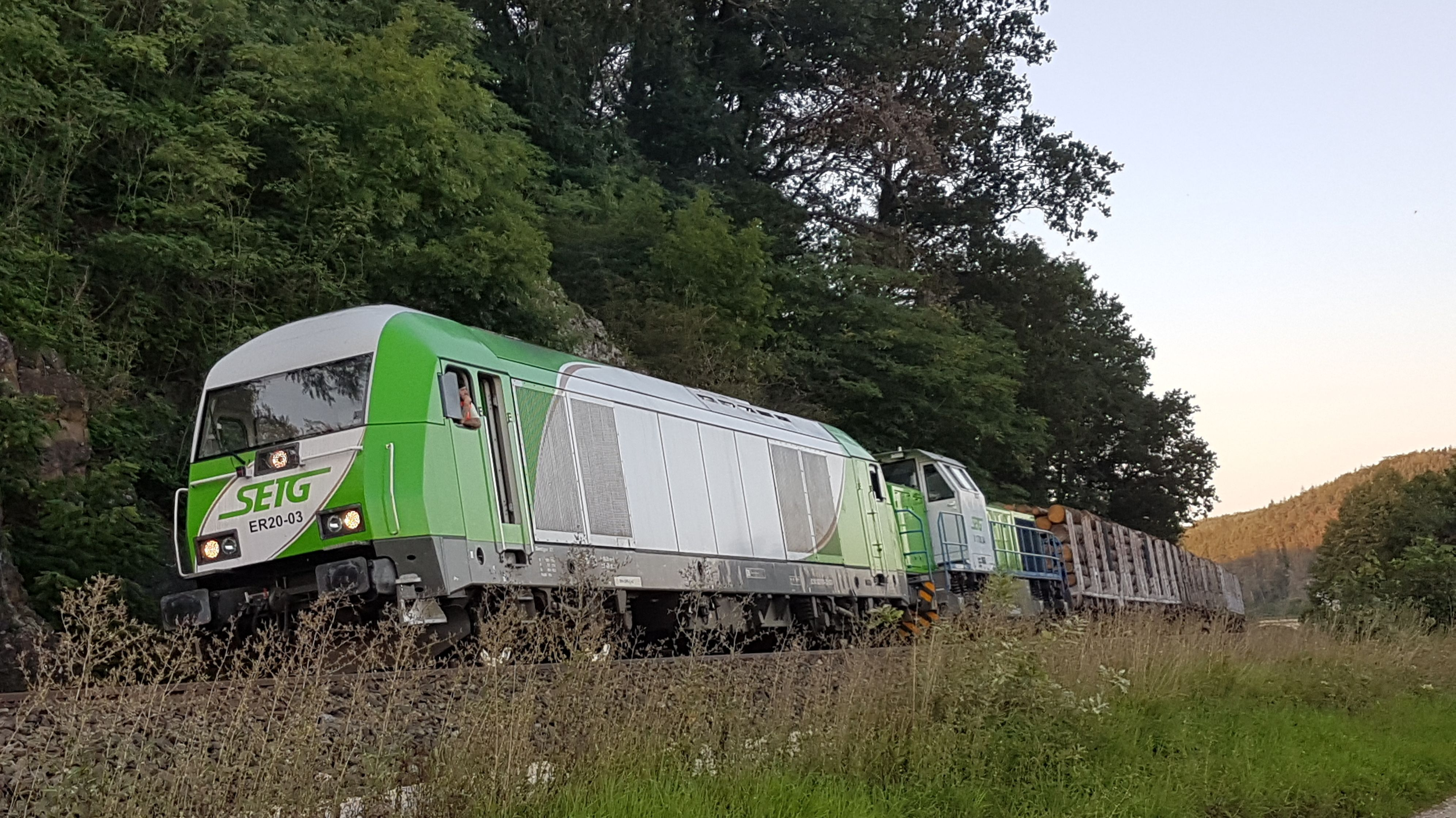 Ein mit Holzstämmen beladener Güterzug steht vor Bäumen