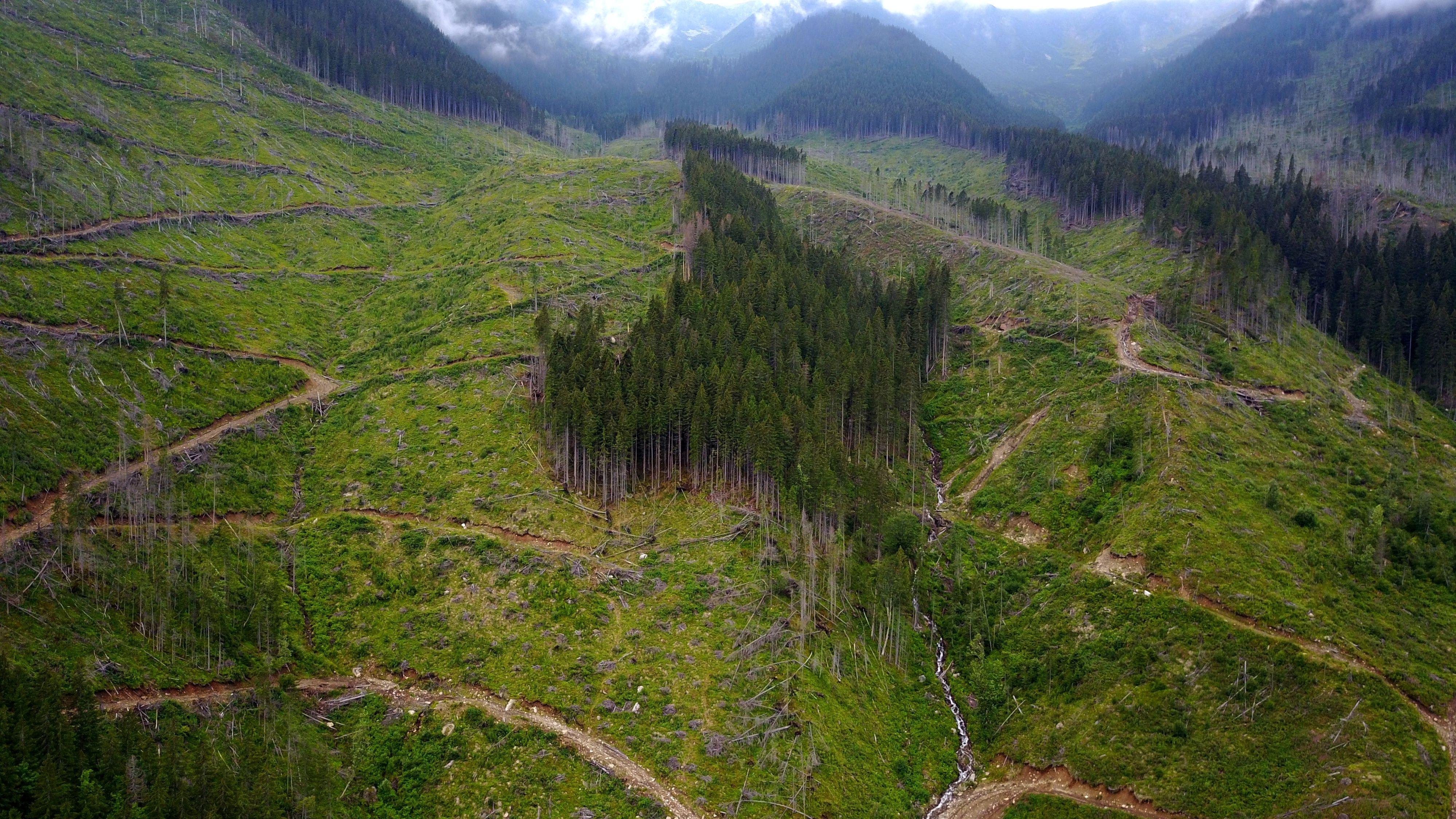 An einem Berghang ist nur noch ein kümmerlicher Rest Urwald-Bäume übrig. Rund herum ist bereits alles abgeholzt.