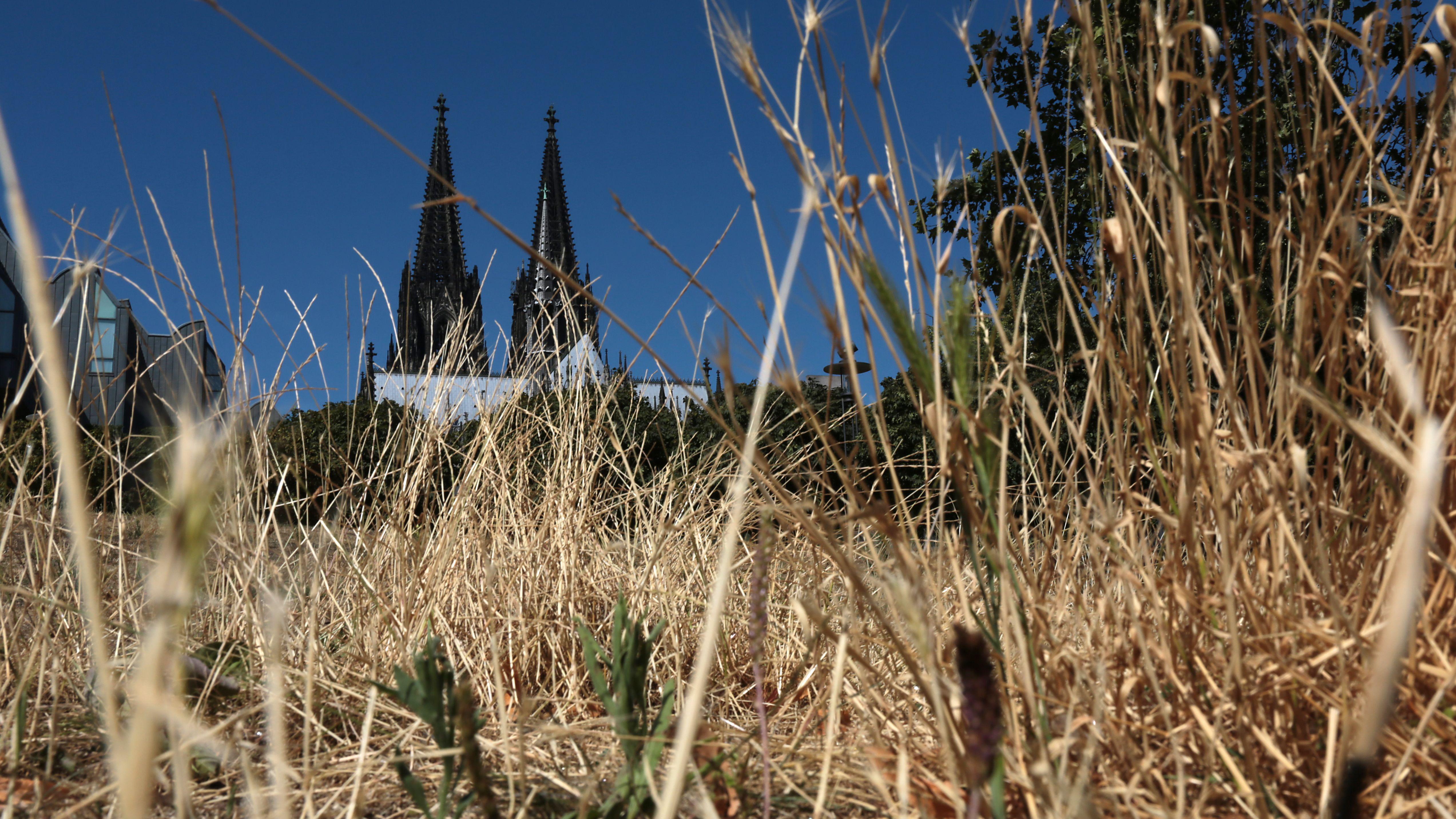 Kölner Dom hinter Feld